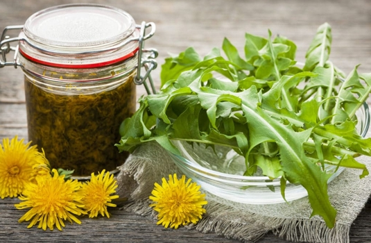 Dandelion - healing effect, application and folk recipes
