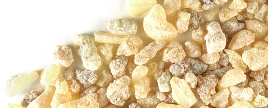 Boswellia - the plant that helps for healthy joints and muscles