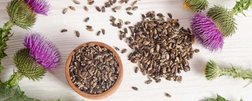 Milk thistle and its benefits for the liver