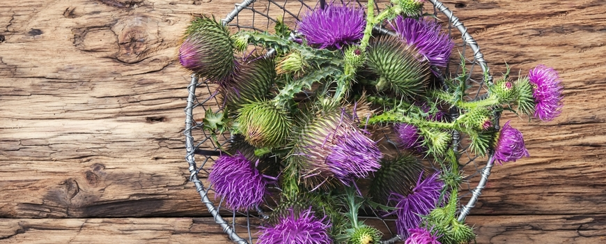 Milk thistle oil - natural remedy against liver problems
